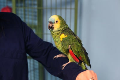 another chance new specials sale online All About Amazon Parrots | Nova Pets Health Center