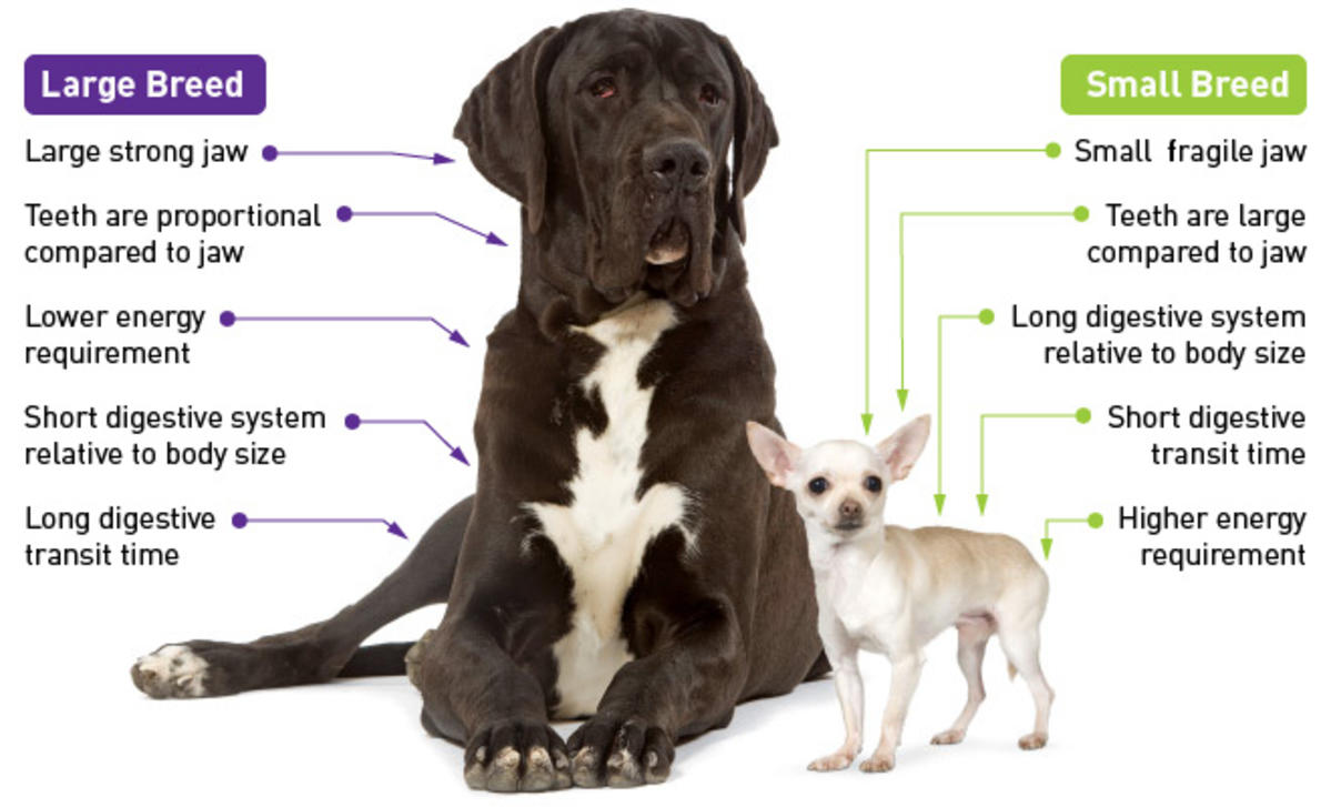 Small Vs Large Breed Dogs Which Is Right For You Nova